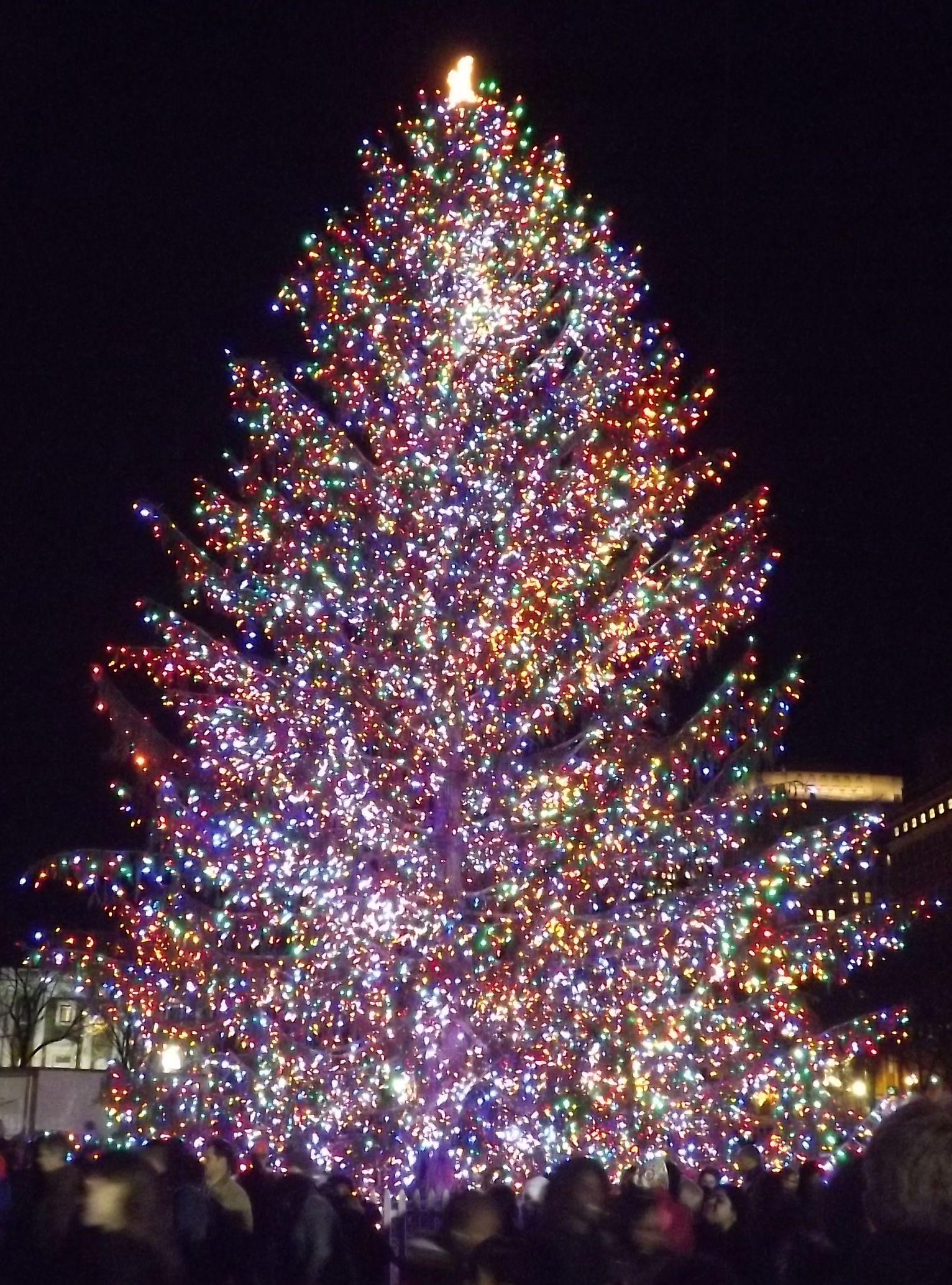 Christmas tree lighting in New Haven, CT Christmas