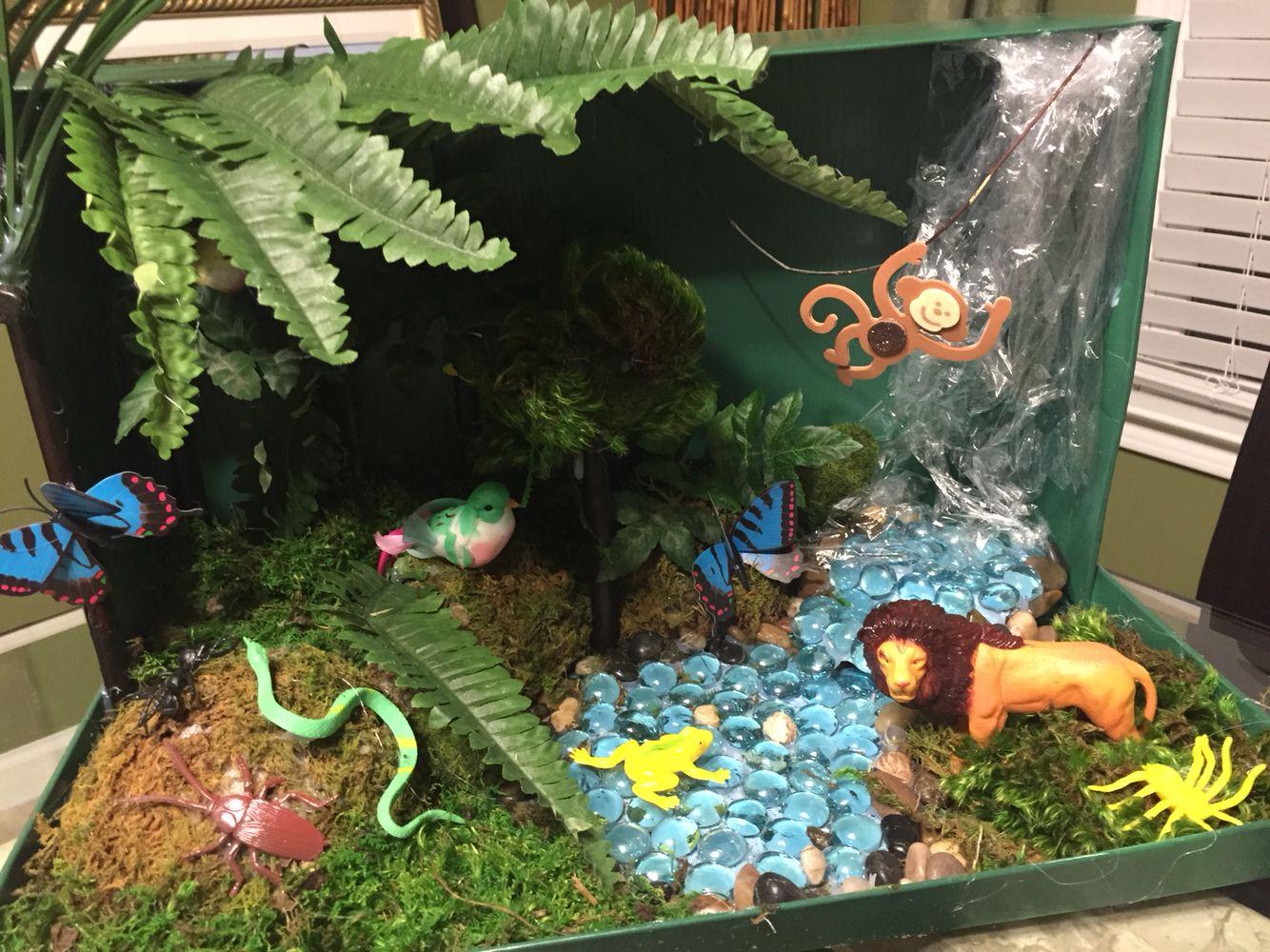 4th Grade Rainforest Ecosystem Shoebox Diorama Tropical