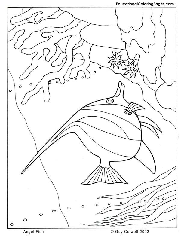 1000 images about coloring pages lineart animals ocean dwellers