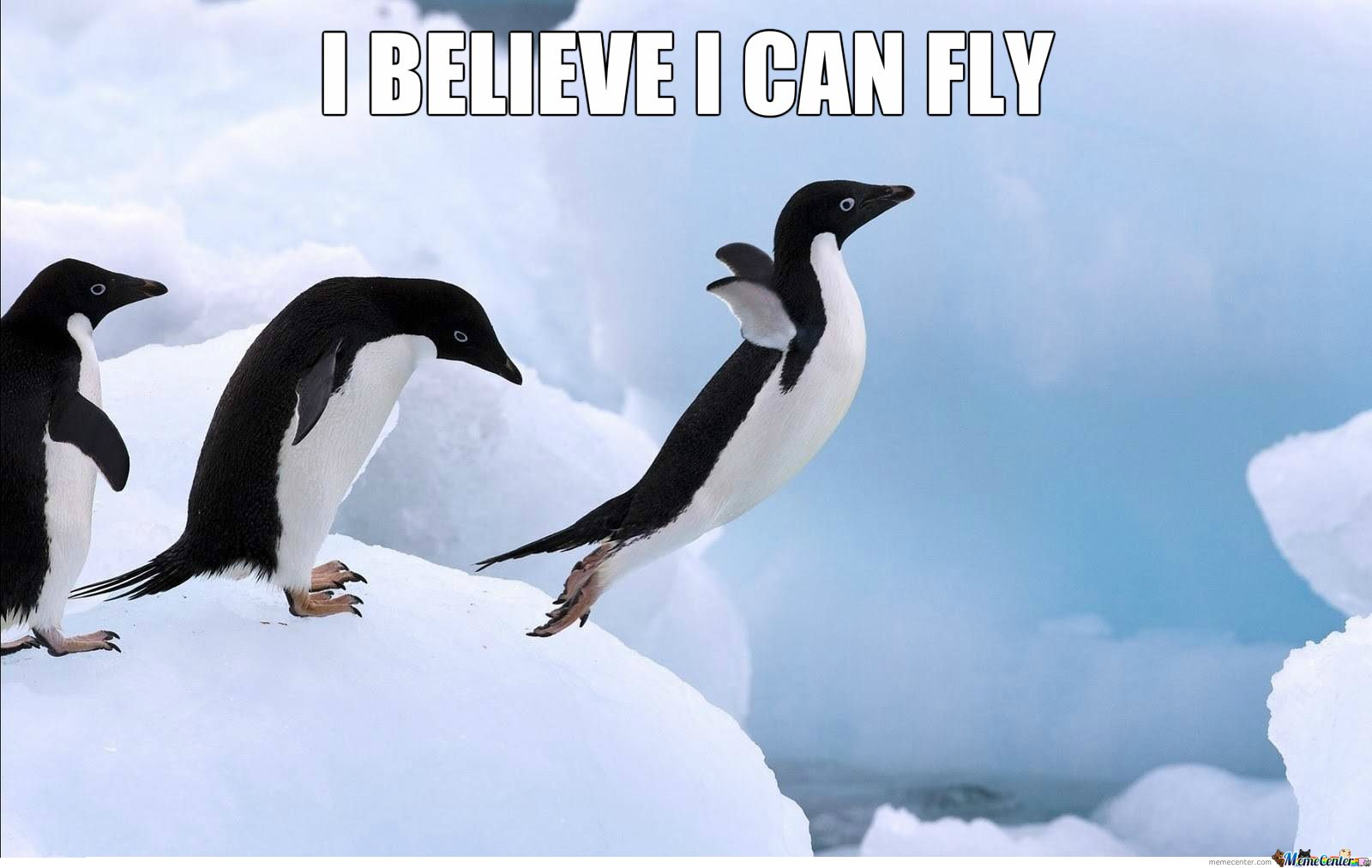 Funny cute penguin pictures, photos, images Penguin