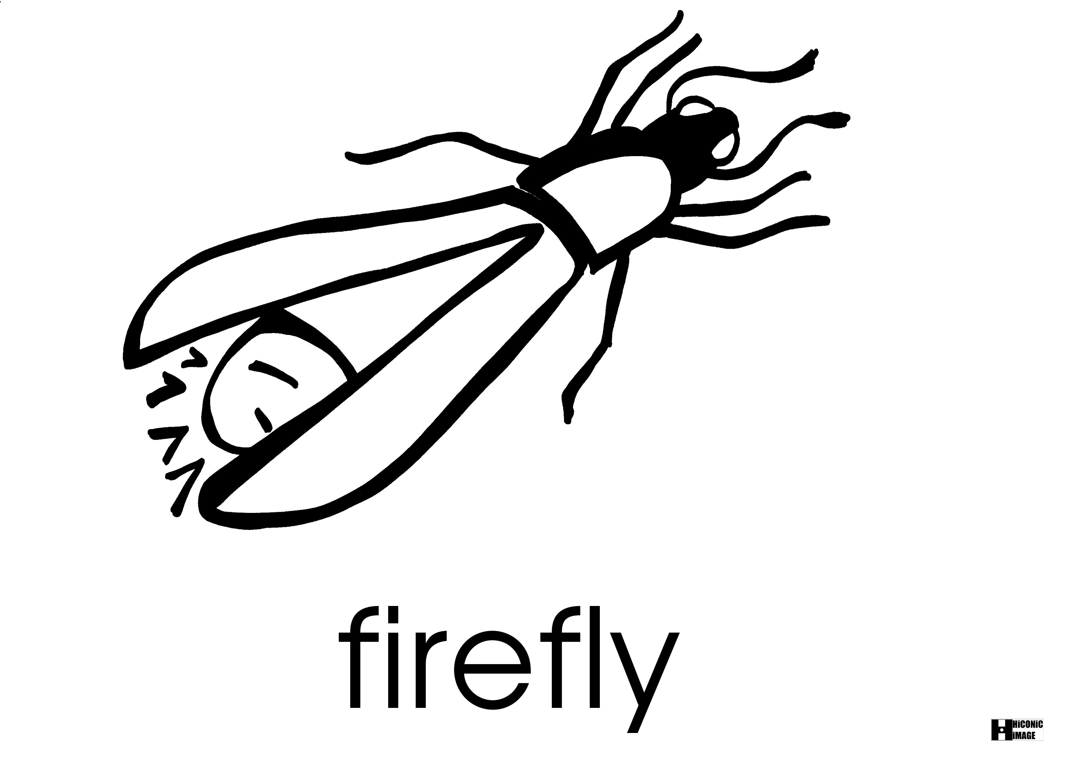 Firefly Flashcard Engllish Eigo Note