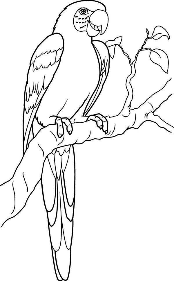 coloring pages coloring and blue on pinterest