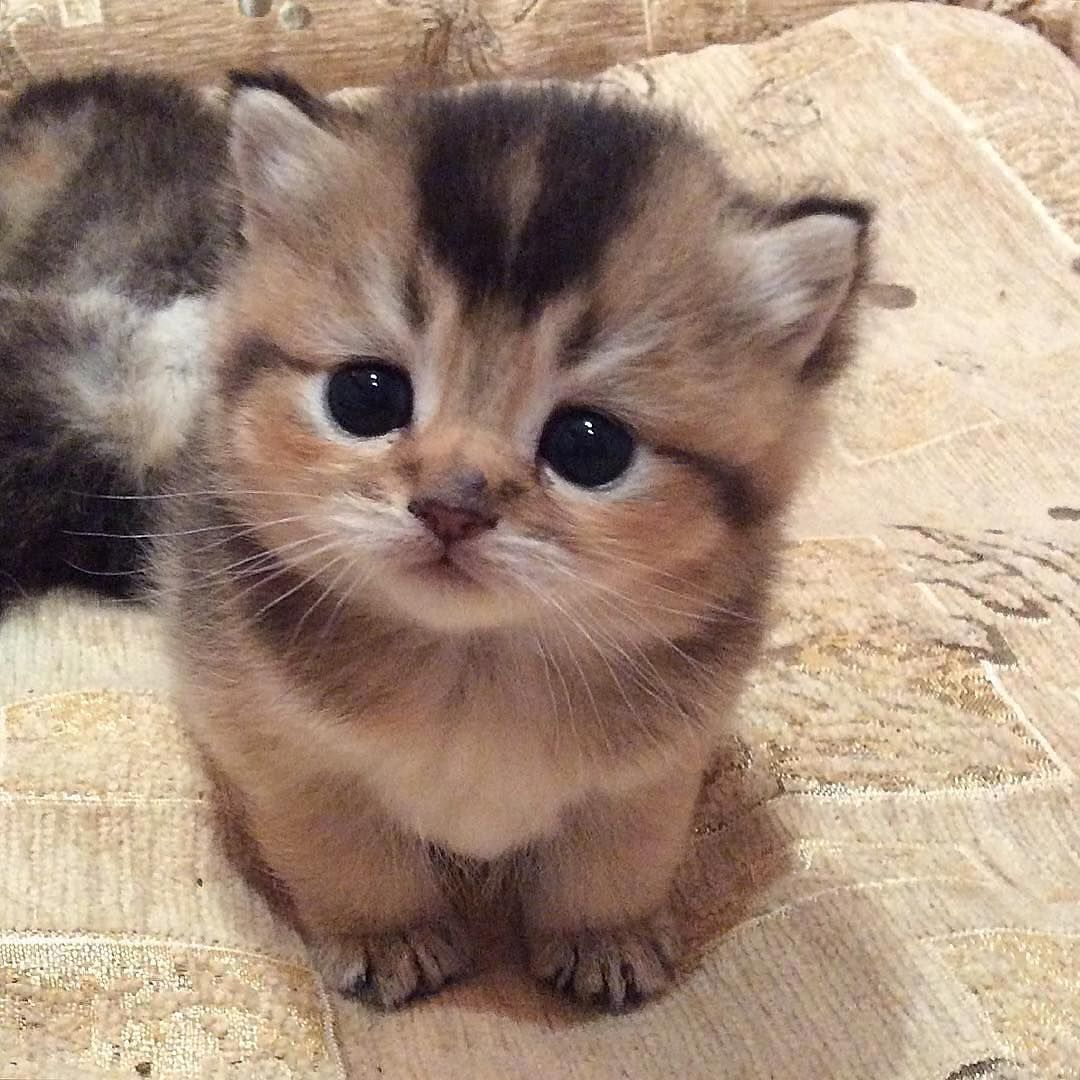 Love Cute Cats Cat, Animal and Kitty
