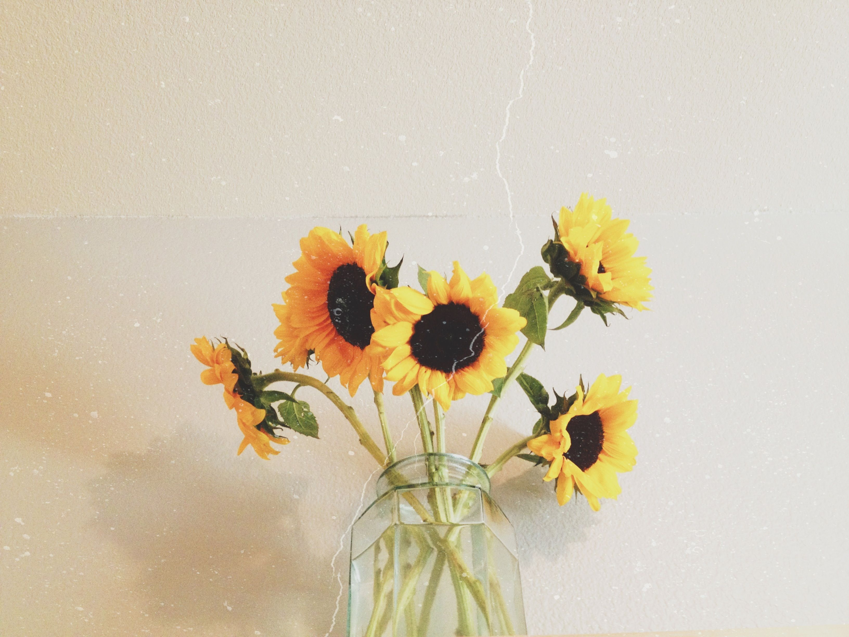 when I die put sunflowers on my grave. I hate roses