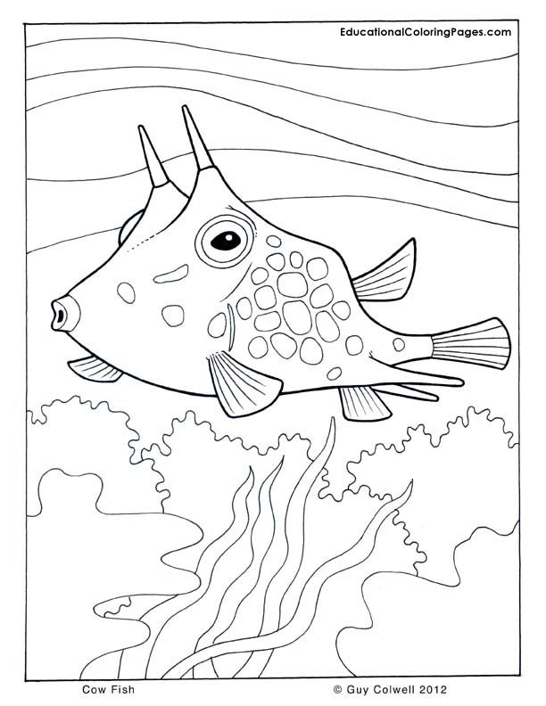 1000 images about ocean on pinterest coloring pages tropical
