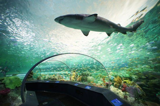 Image result for Ripley's Aquarium toronto+pinterest