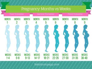Progression Chart | Baby Things | Pinterest | Pregnancy, Babies and Baby planning