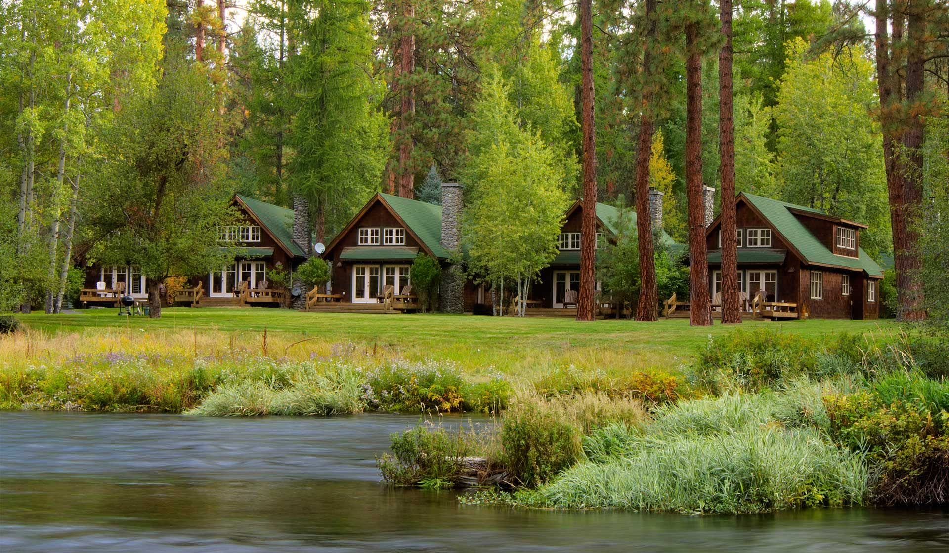 More rustic luxury cabins surrounded by lush forest