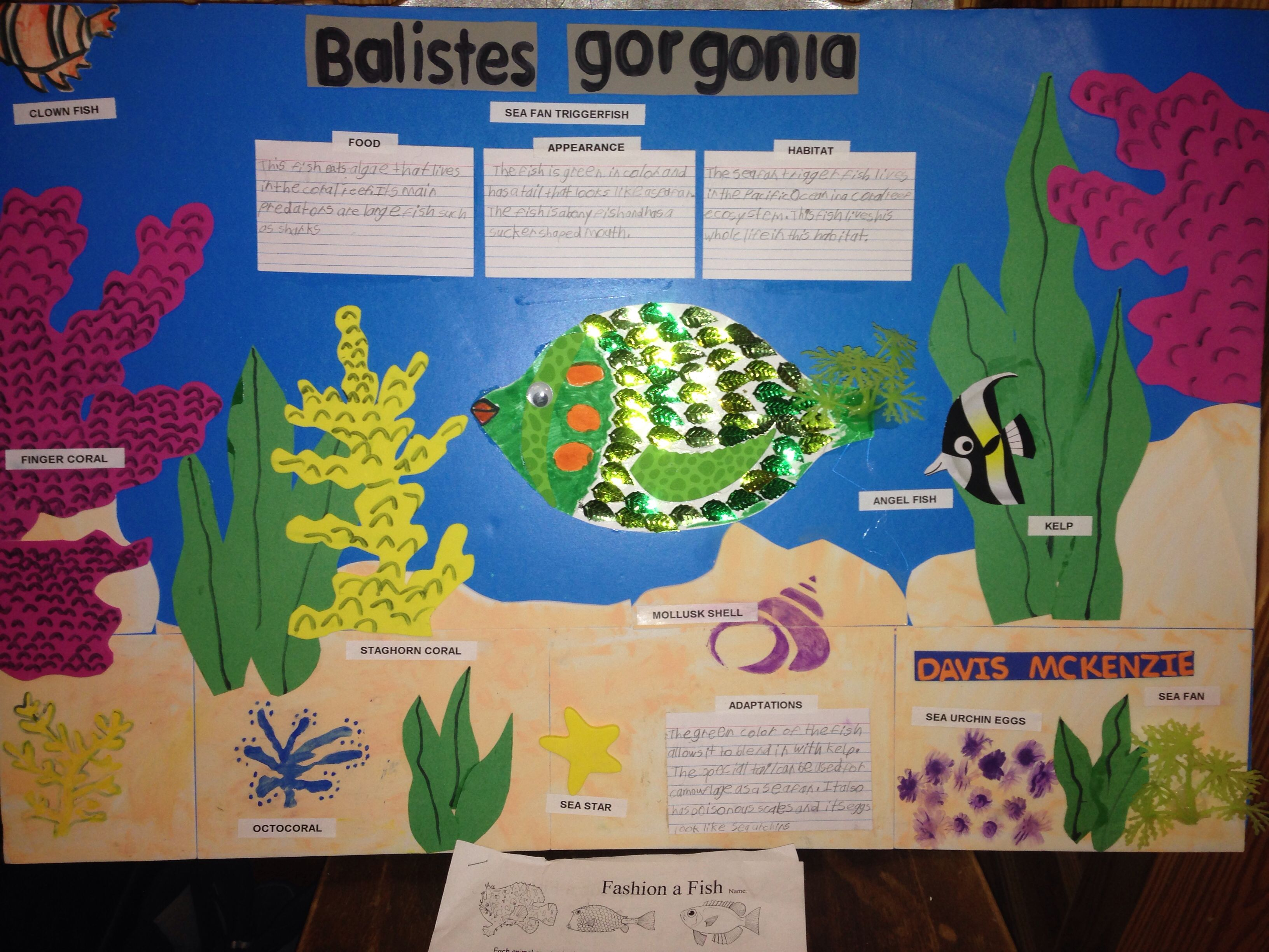Fashion A Fish 4th Grade Science Coral Reef Ecosystem