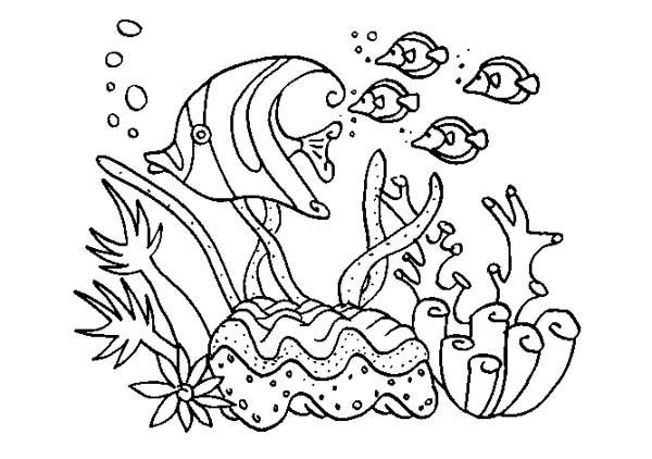 coral reefs a group and coloring pages on pinterest
