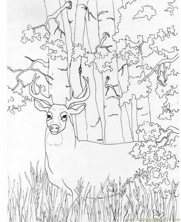 1000 images about artsy on pinterest coloring pages coloring