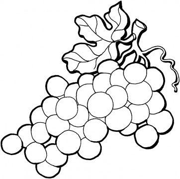 1000 images about grapes Ð Ð Ð Ð Ð Ñ Ð Ð on pinterest exotic fruit