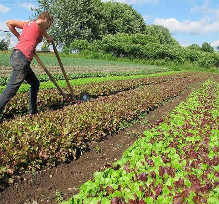 How To Earn 140k Farming 1.5 Acres gardening