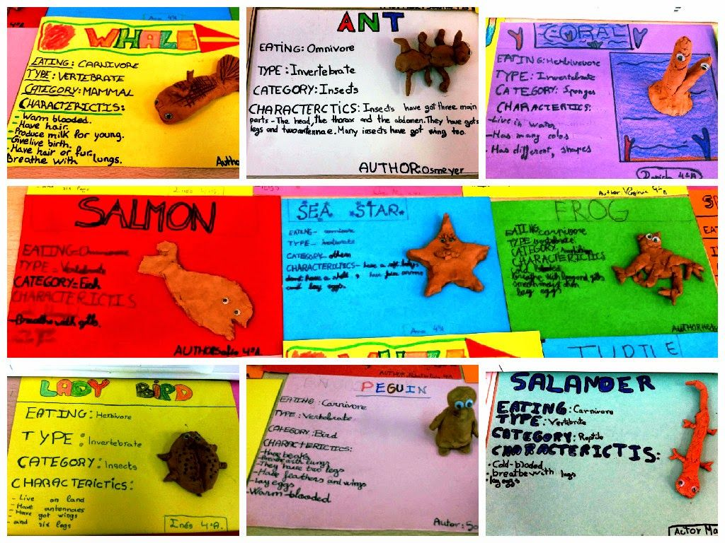 Vertebrates And Invertebrates Museum Project