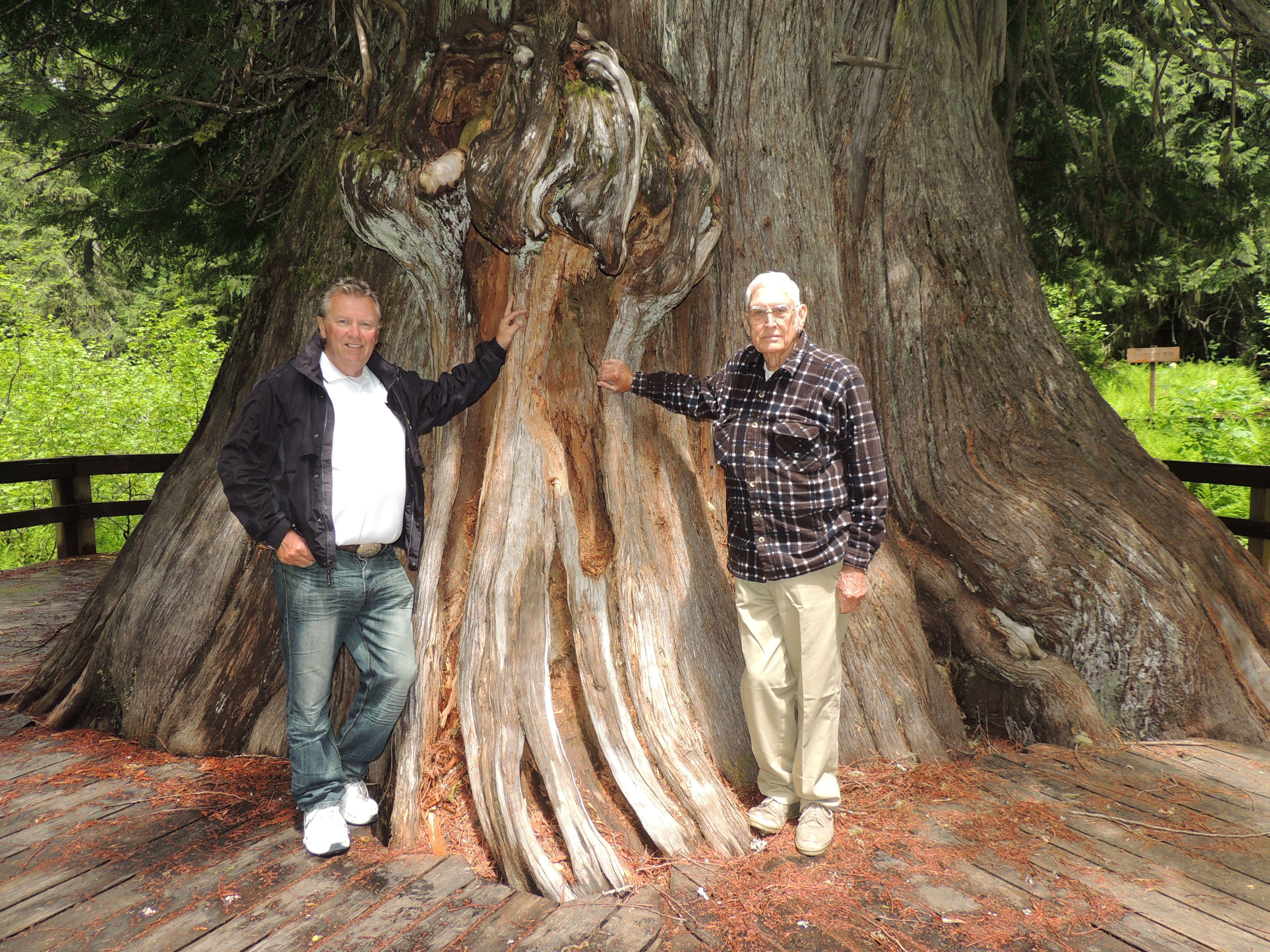 Giant Western Red Cedar Tree, near Elk River, Idaho