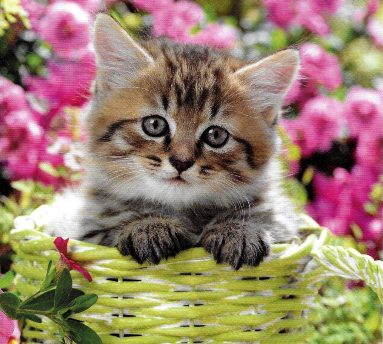 Cute Little Fluffy Tabby Kitten Aww! ♥ Cute Fluffy
