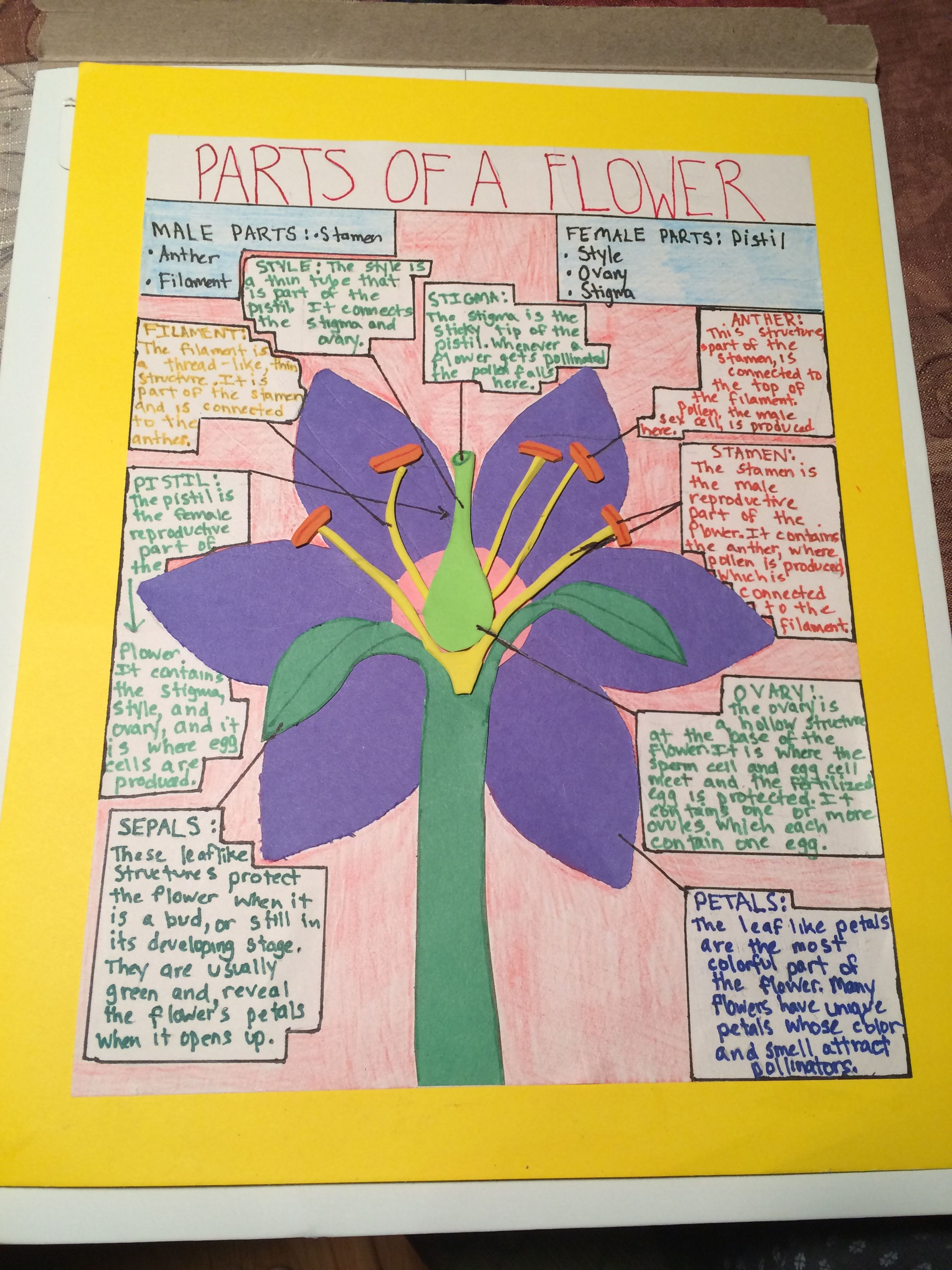 Parts Of A Flower Poster Project For 7th Grade Science