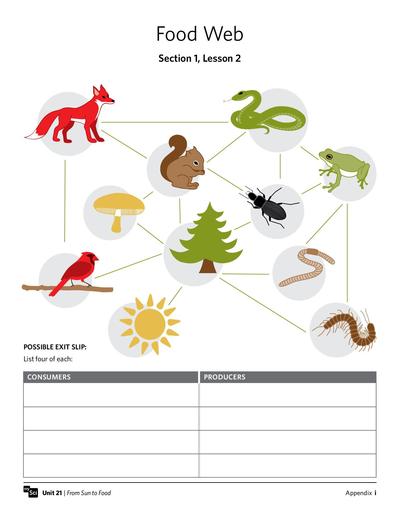 Aquatic Food Chain Worksheets