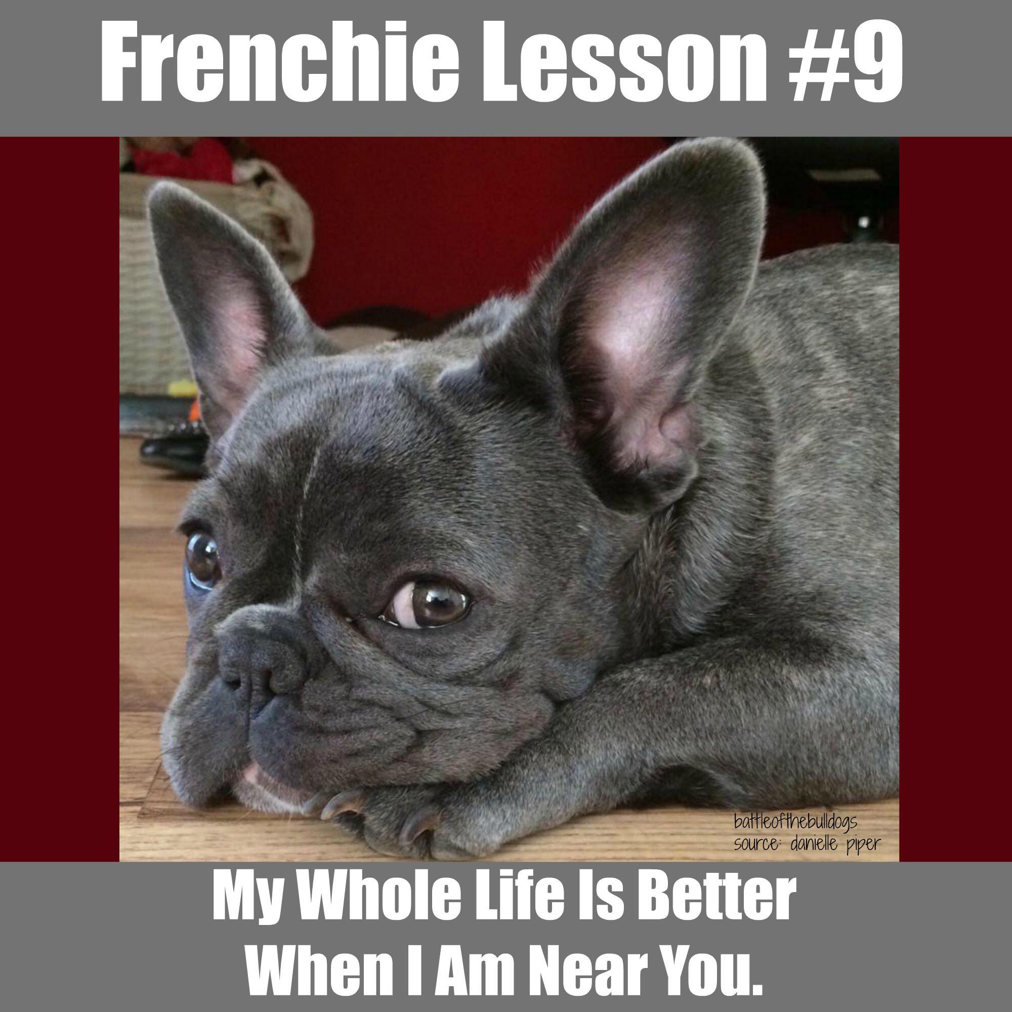 Frenchie Lesson 9 Frenchie Memes Pinterest French