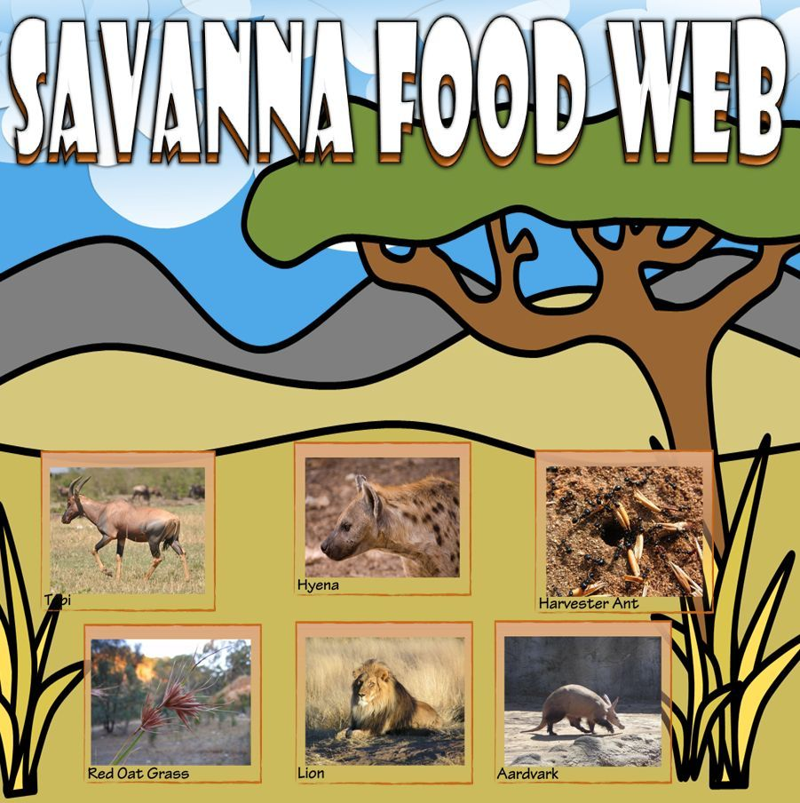 Food Chain and Food Web Savanna Card Sort Activities