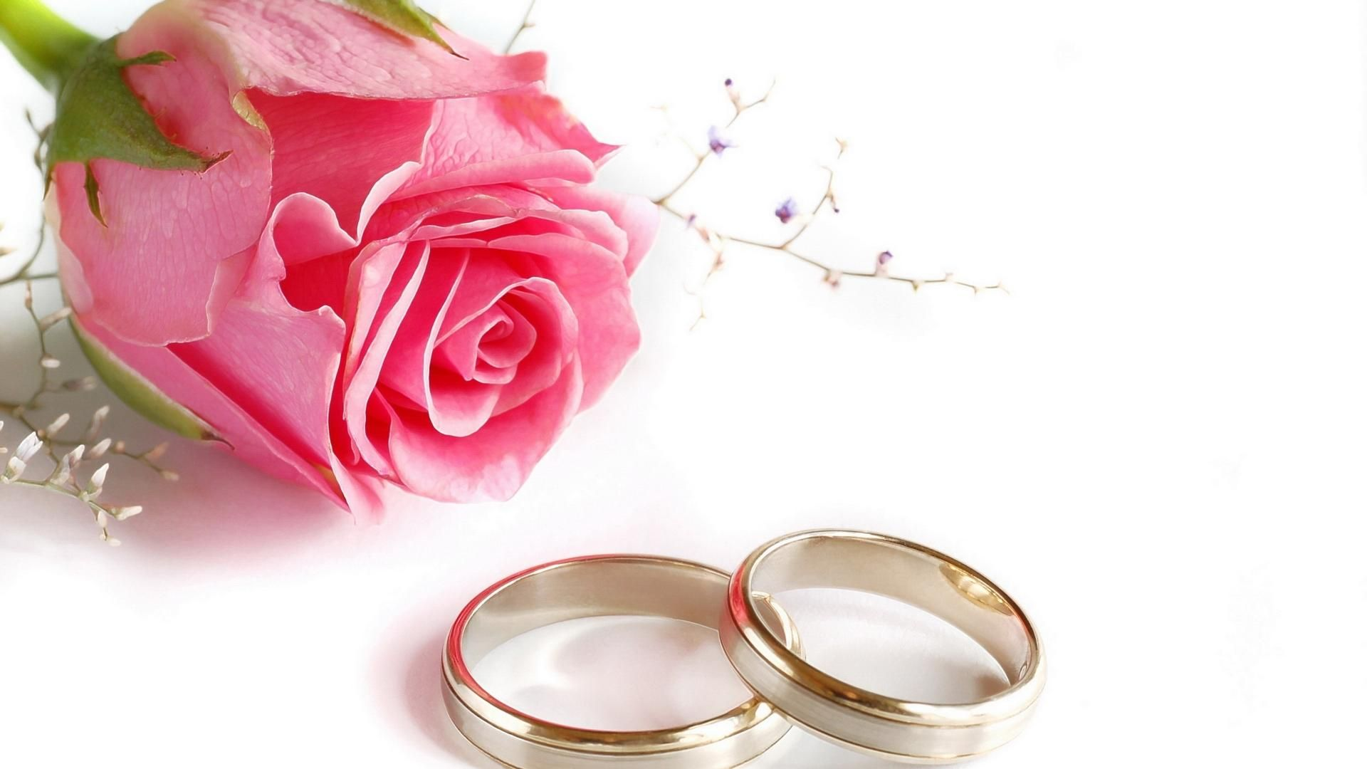 Wedding Rings Rose Flower HD Wallpaper