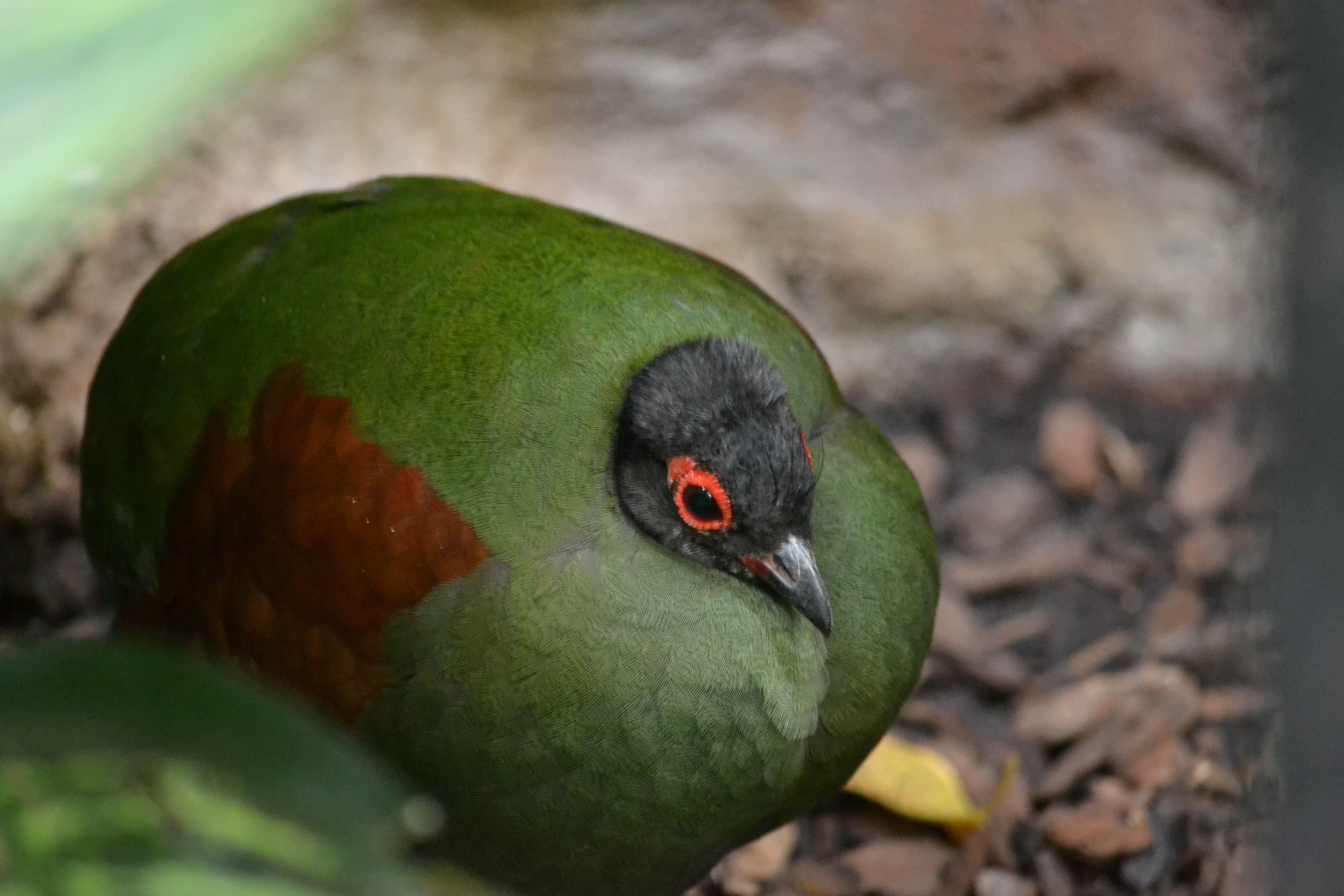 The weirdest looking bird I've ever seen. (Memphis Zoo