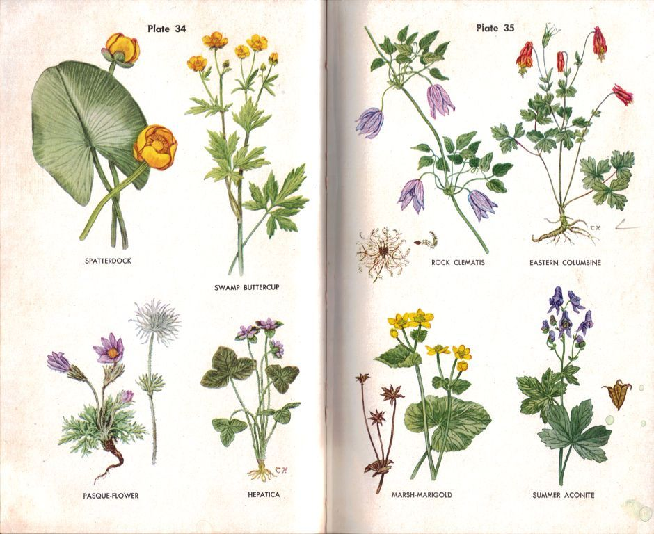 wildflowers with names Google Search Stationery