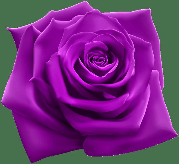 Purple Rose PNG Clipart Image Roses Pinterest