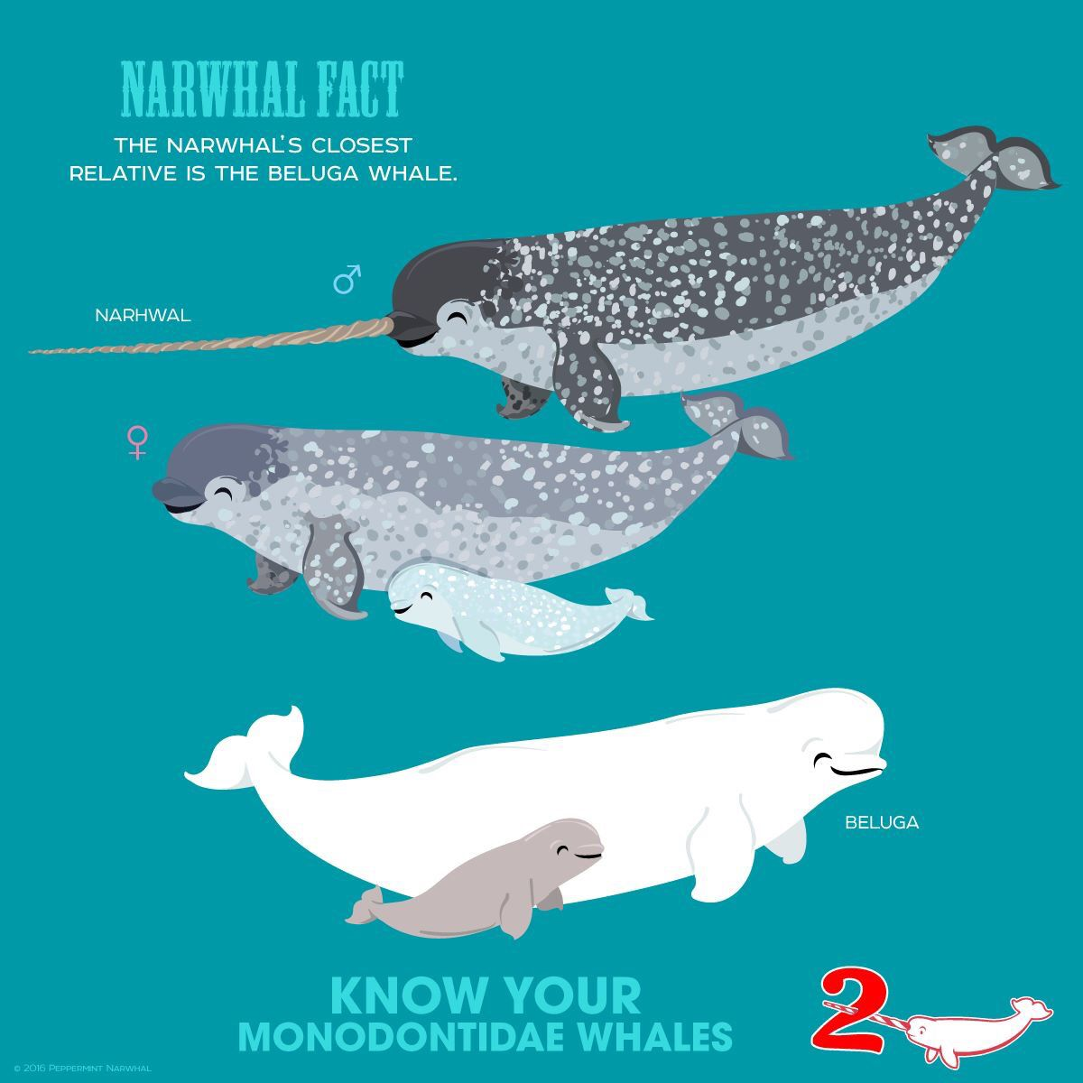 Pin By Meredith Seidl On Peppermint Narwhal Creative Fun