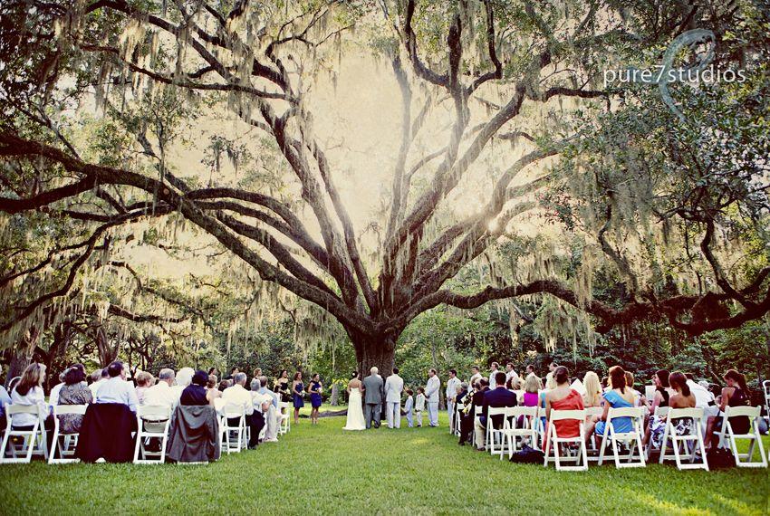 wedding under the wedding tree in Eden Gardens...look at