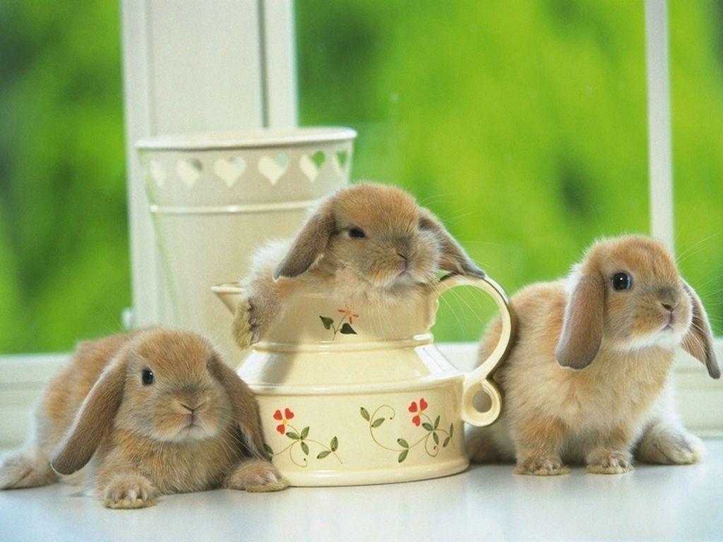 bunnies pics | bunny rabbits rabbits | bunnies~ | pinterest