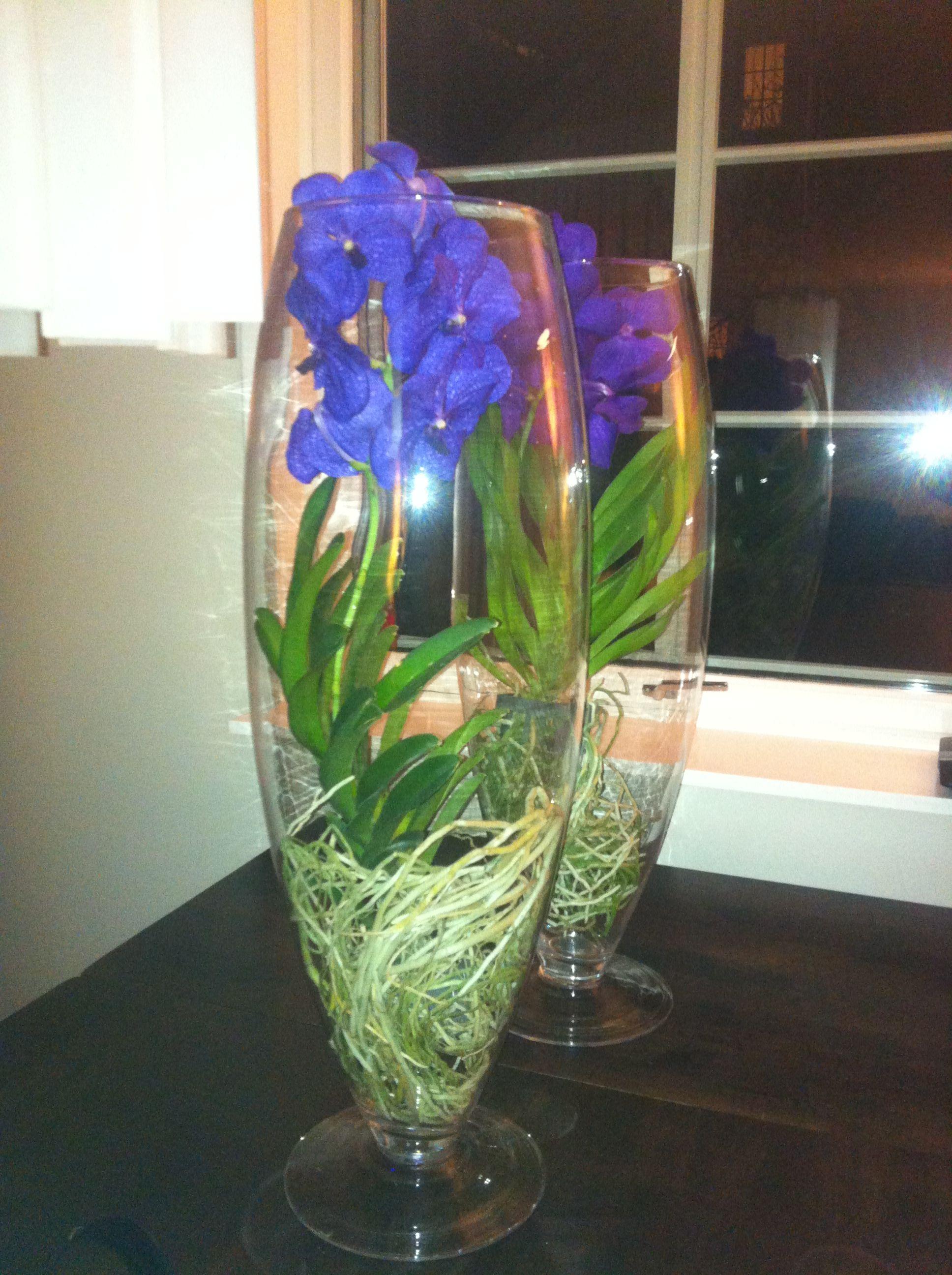 Orkideer i vase, Wanda orkide blå Flowers Pinterest