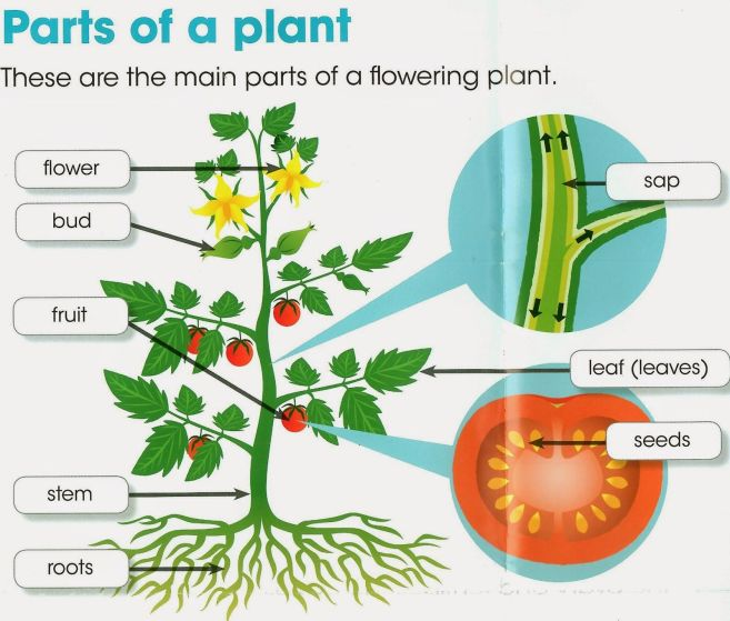 Image result for parts of plants