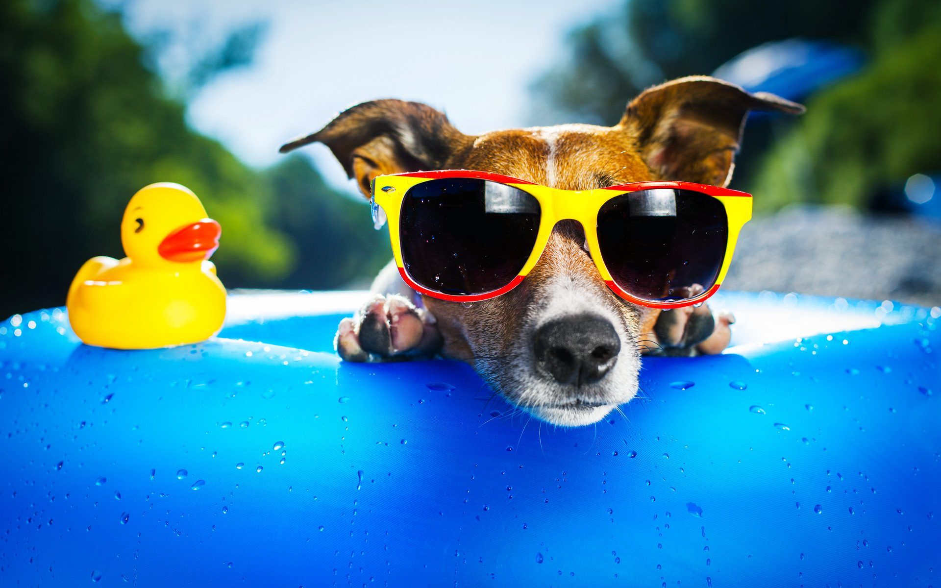 Cool Dog With Sunglasses Dogs, cats and other critters