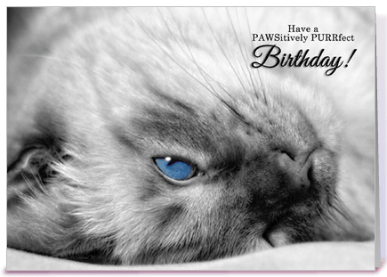 images of happy birthday to a cat lover Google Search