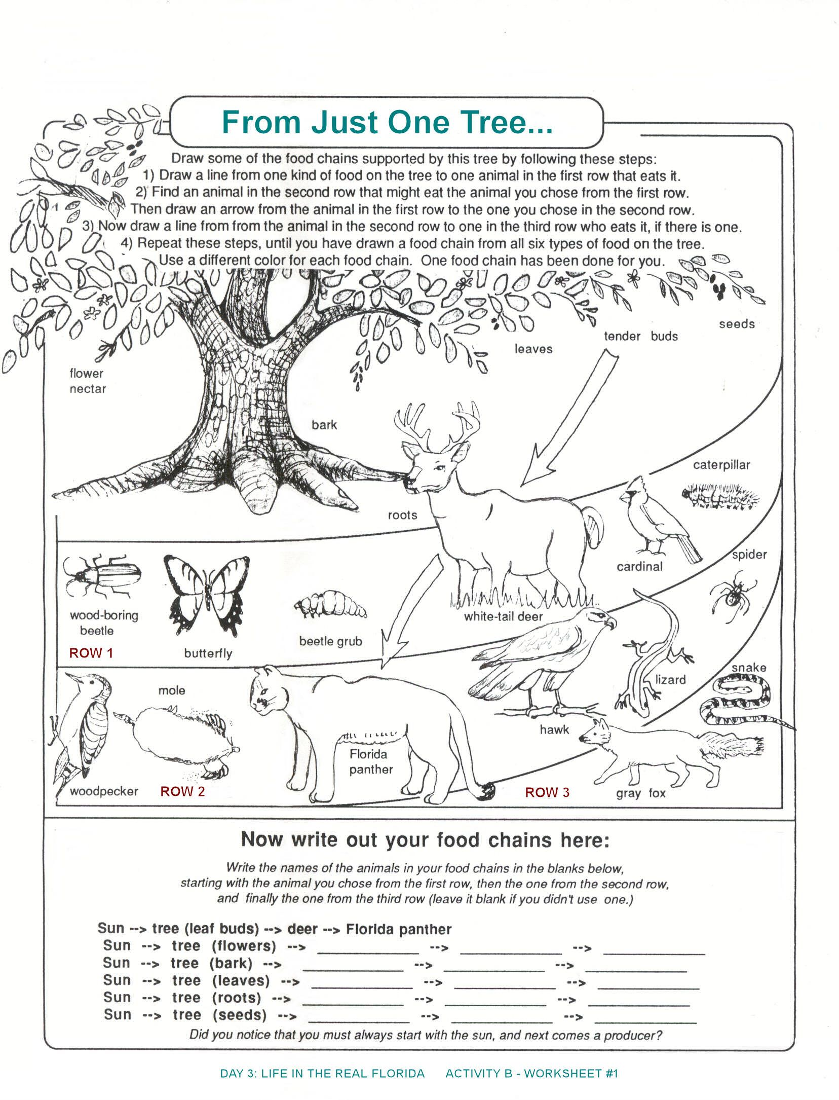 Printable Food Chain Vs Food Web Worksheet