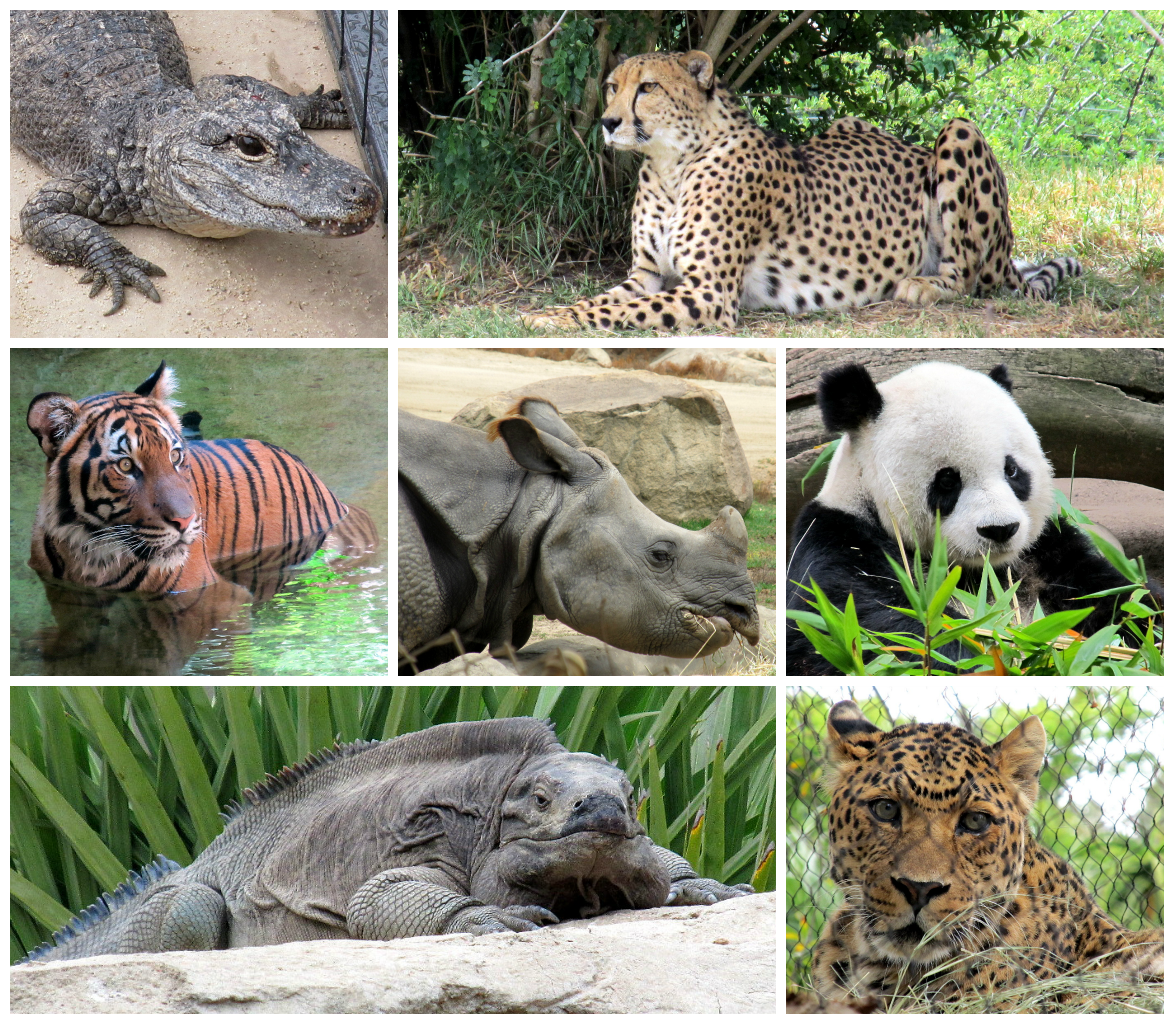 endangered species Google Search Save these animals