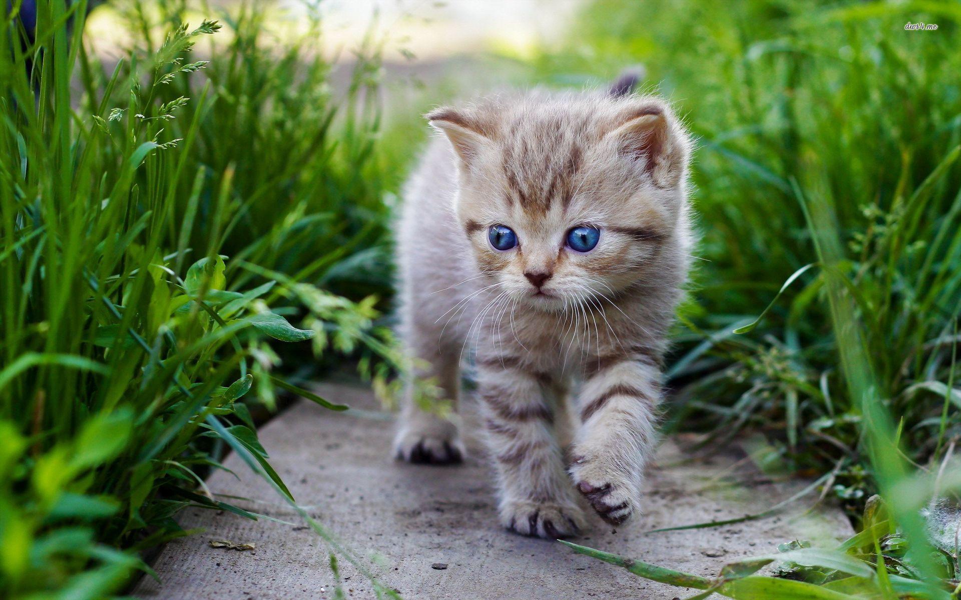 Cute Baby Cat wallpaper Animal wallpapers 27967