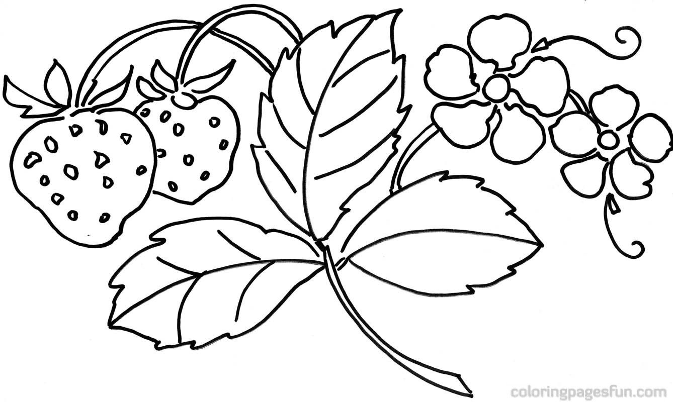1000 images about coloring patterns on pinterest flower