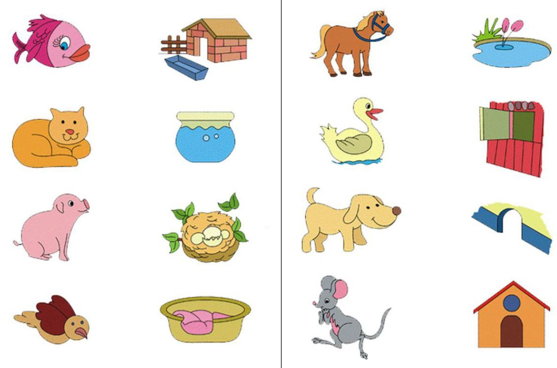 Cada Animal Con Su Casa