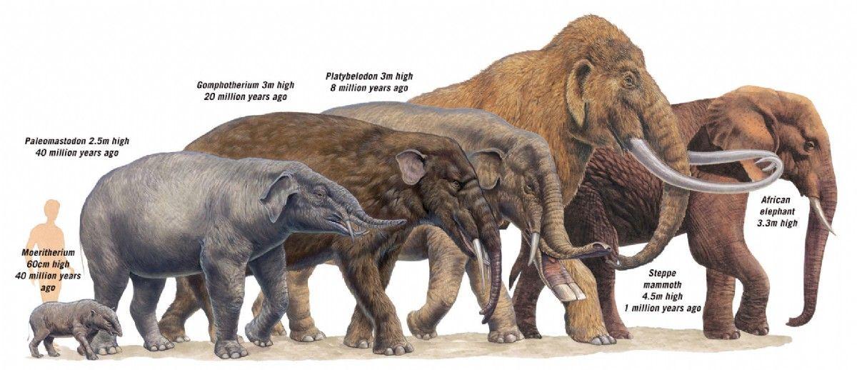 extinct elephant species Google Search random stuff