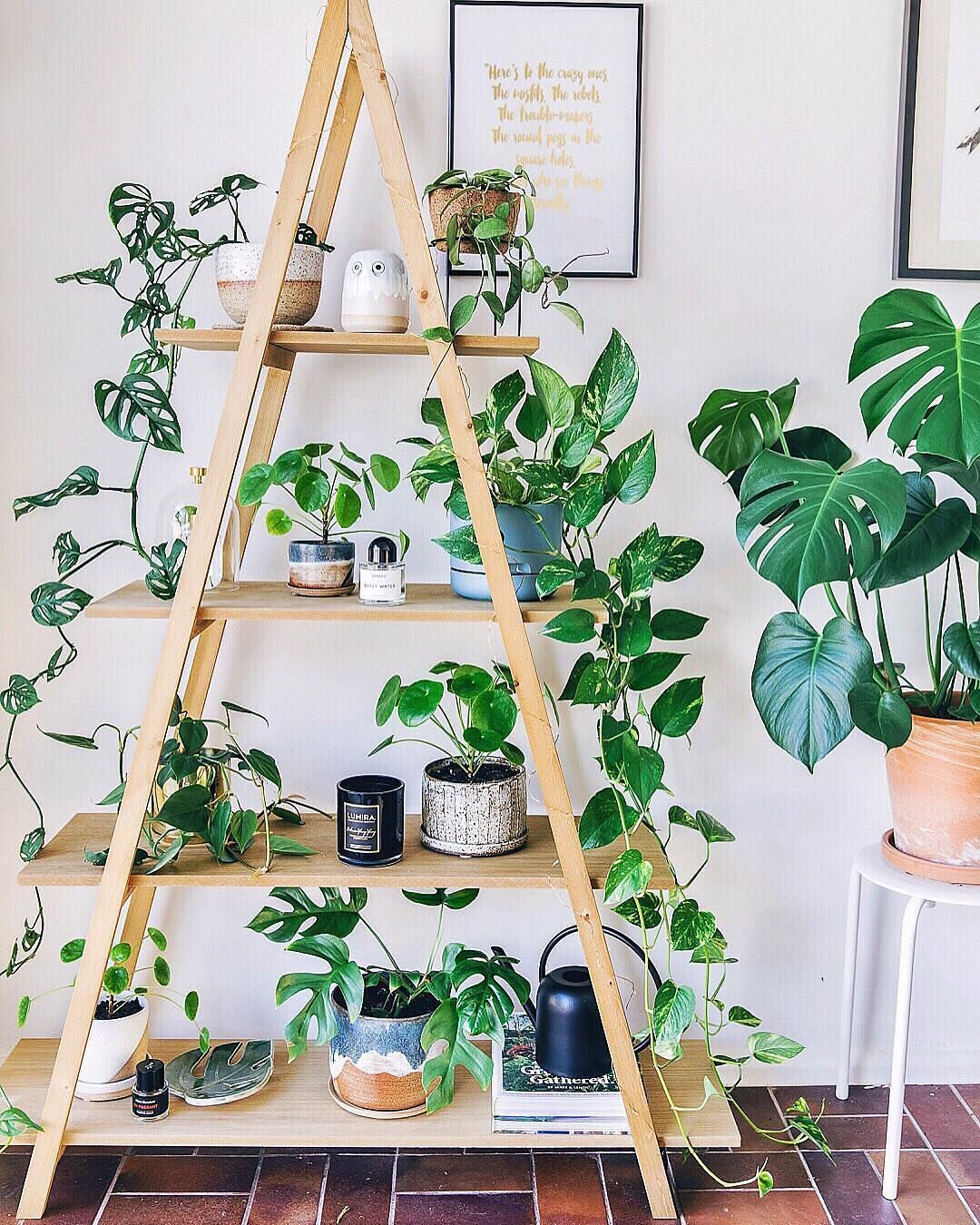 Instagram House plant ideas Pinterest Instagram