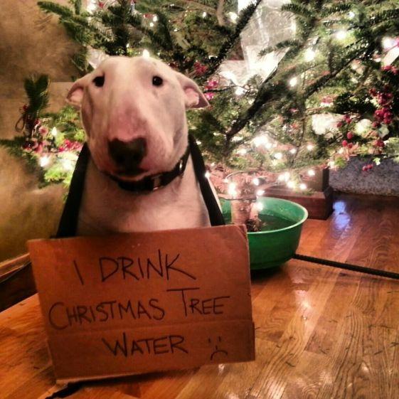 Image result for naughty christmas dog