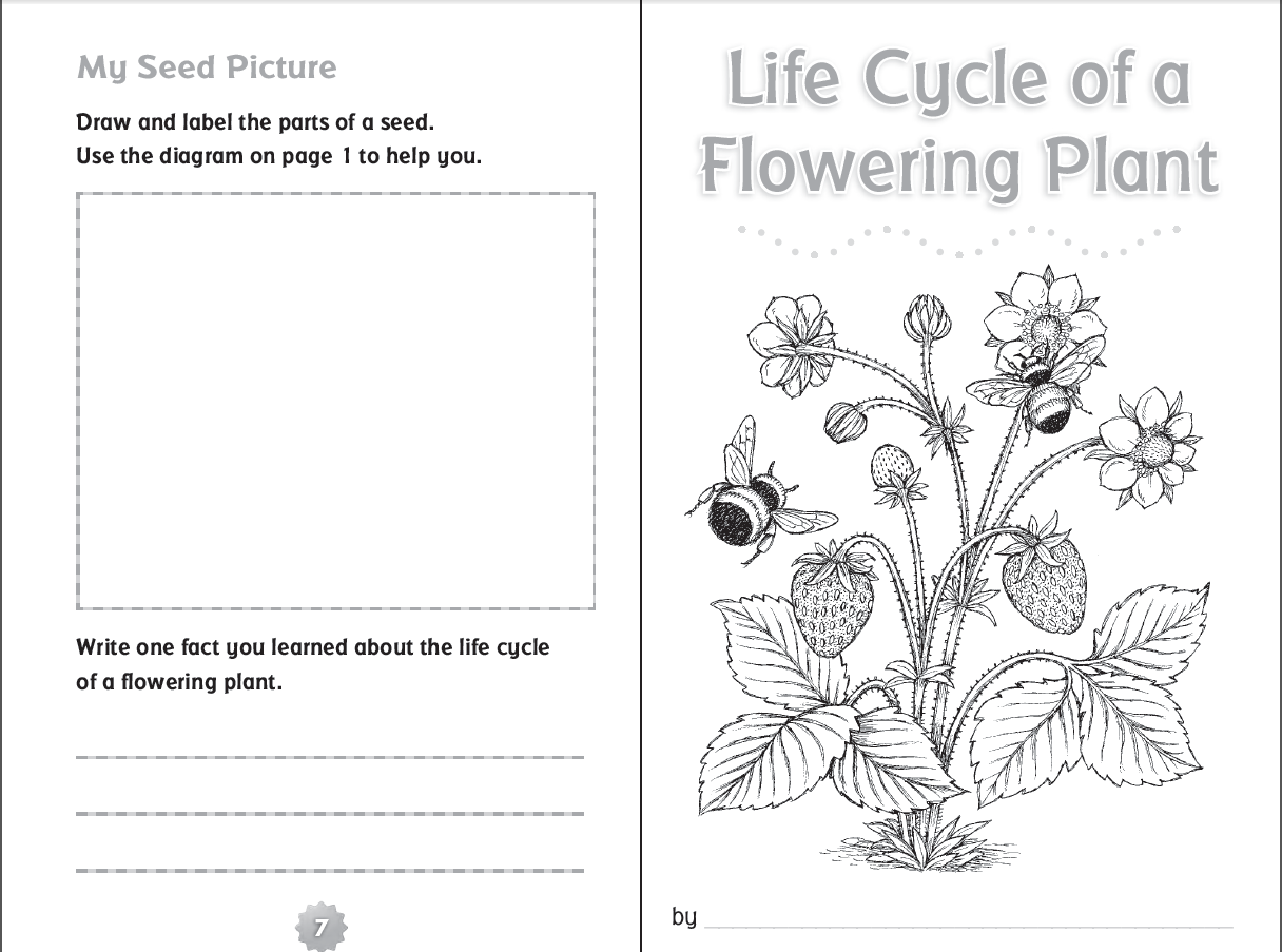 Life Cycle Of A Flowering Plant Printable Booklet