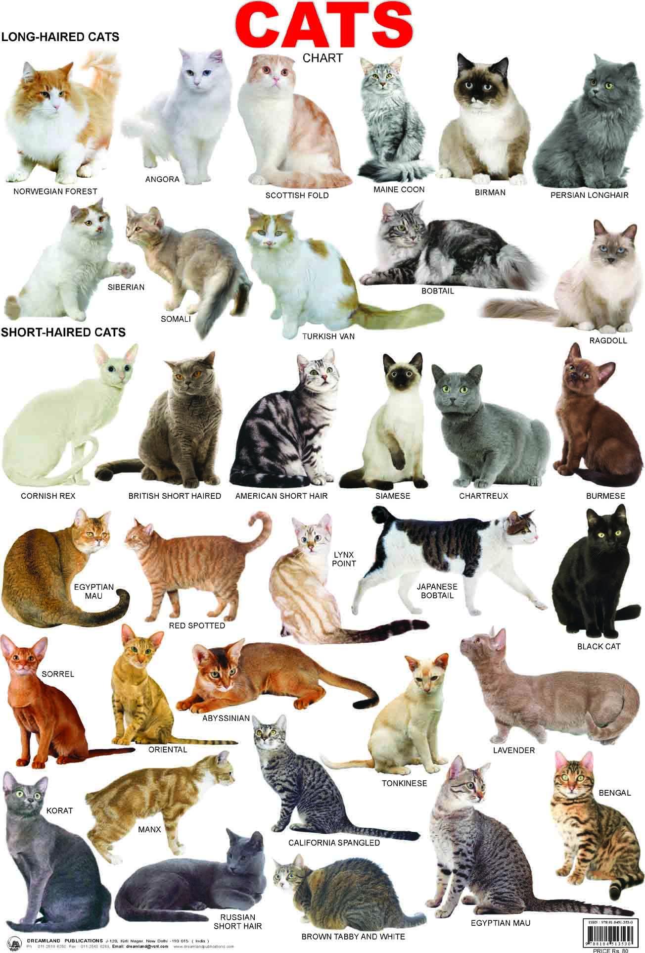 42CATS CHART.jpg (1304×1926) DIEREN Pinterest Cat