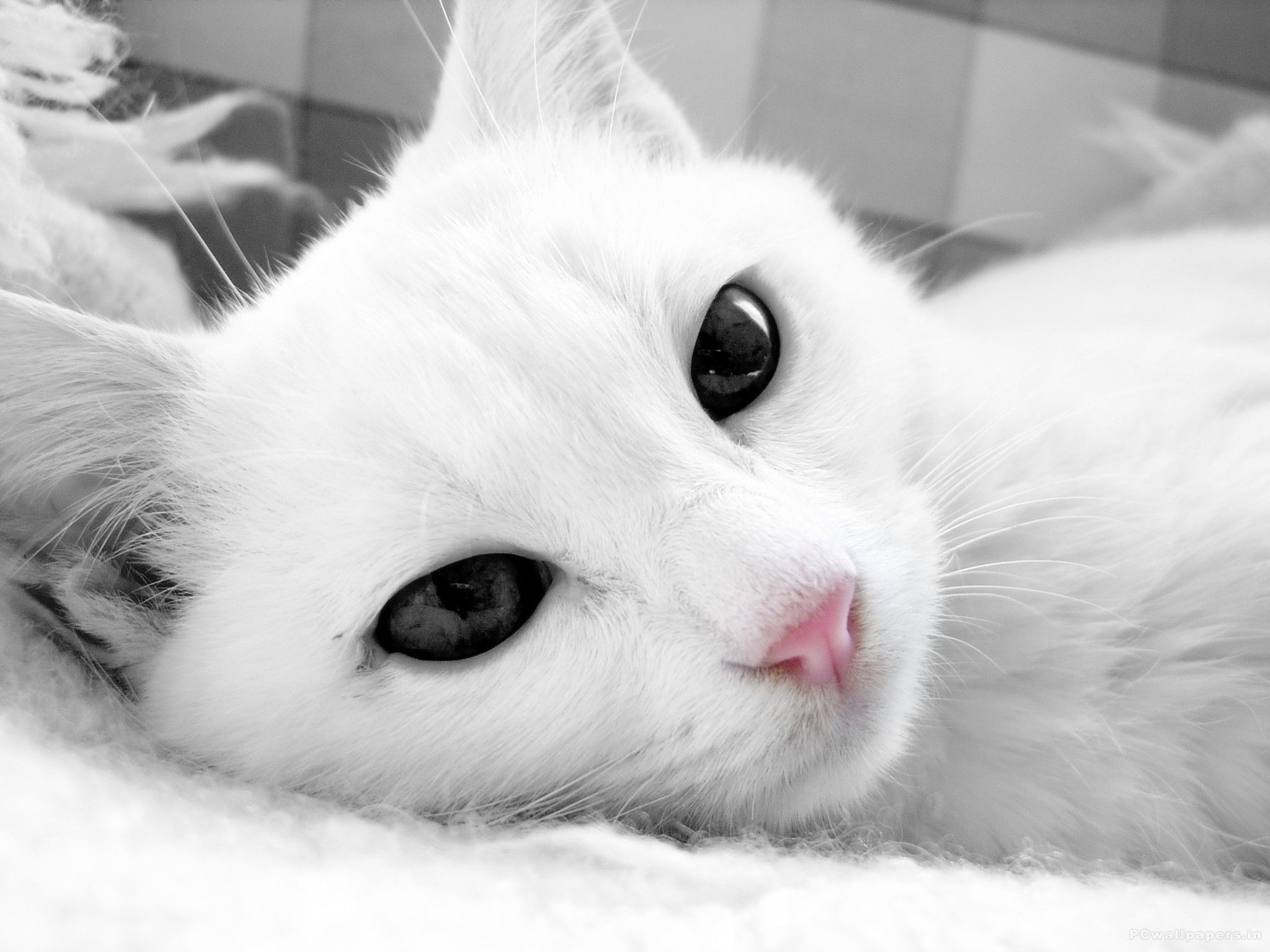 all cat wallpapers wallpapers free download cute cat wallpaper