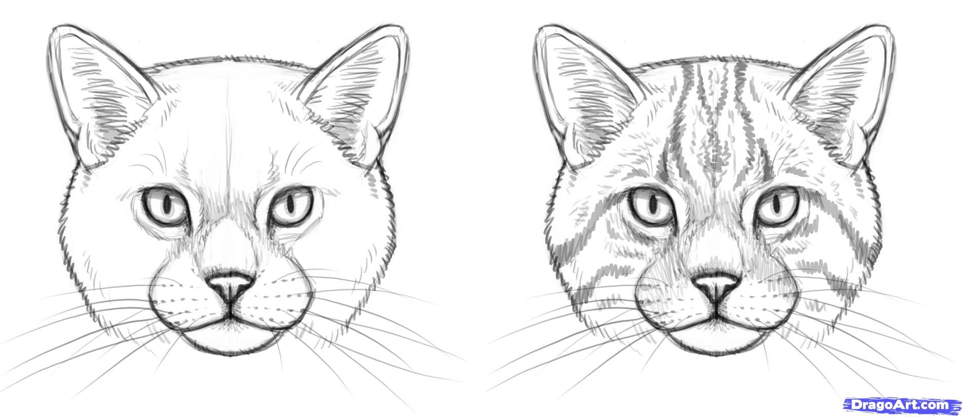How To Draw Wild Cats Step 7