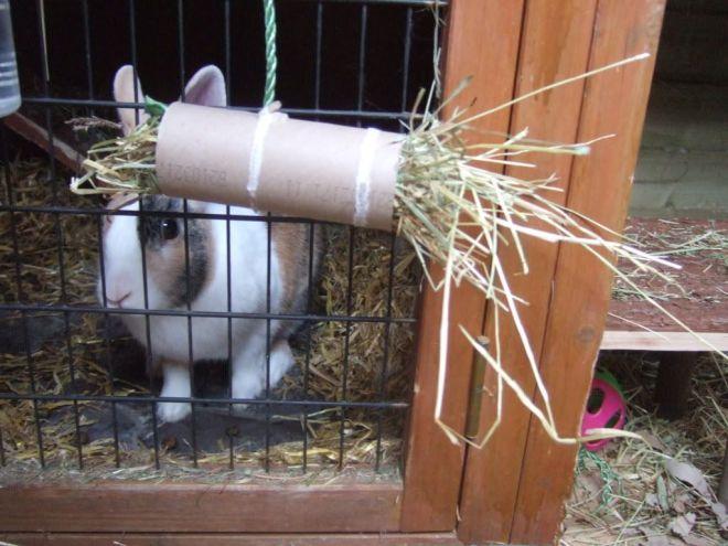 Cardboard roll rabbit hay toy farm camp