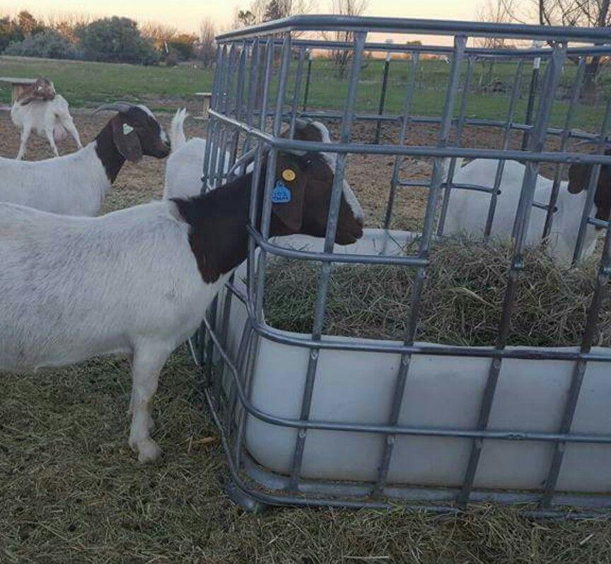 Goat feeder using IBC tote Goat stuff Pinterest Goat
