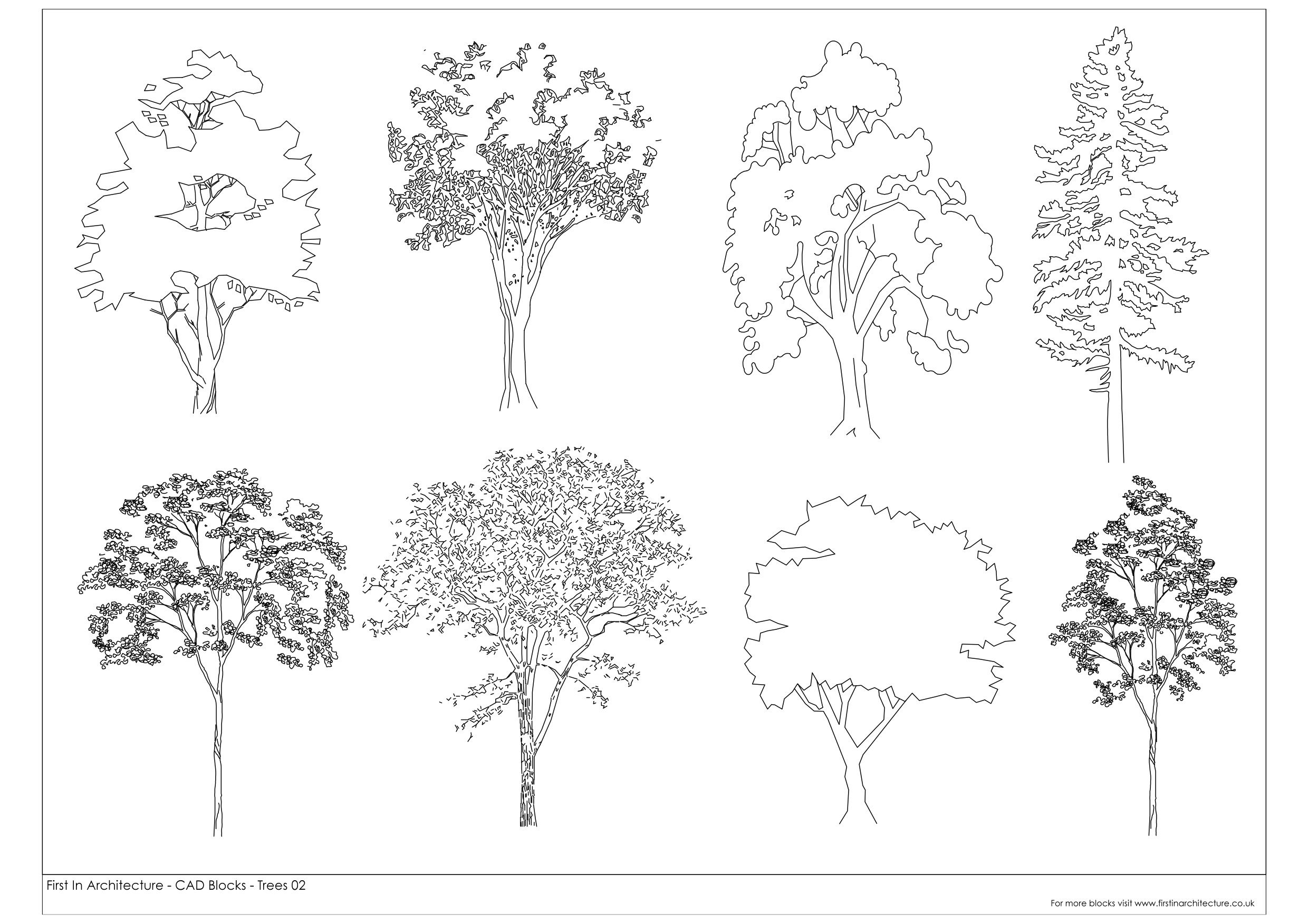 Architectural Tree Sketches Images About Tree On